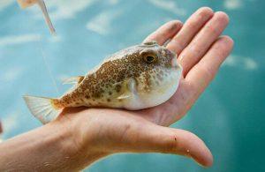 Uzmanı uyardı: Türü bilinmeyen balıkları tüketmeyin, öldürücü olabilir