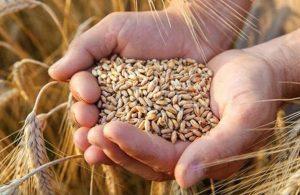 İthalatta rekor! Türkiye, 1.4 milyar nüfuslu Çin'den daha fazla buğday ithal etti