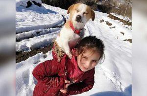 Küçük Cemre, veterinere götürmek istediği Pamuk'u sırtında taşıdı