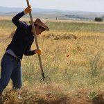 Çarpıcı araştırma: Çiftçilerin saçlarında tarım ilacı kalıntılarına rastlandı