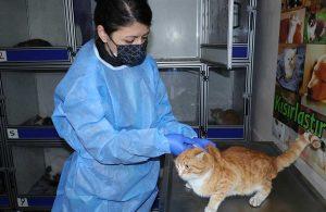 Eskişehir'de kedi koronavirüsü alarmı