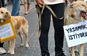 Mersin'de sokak köpeğine işkence! Gözlerini oyup sopayla dövdüler