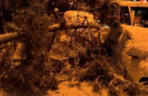 Kaldırımda yürüyen kadının üzerine ağaç devrildi