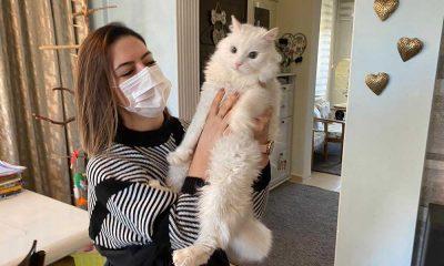 İnsanlar evlere kapandı, kedilerin psikolojisi bozuldu