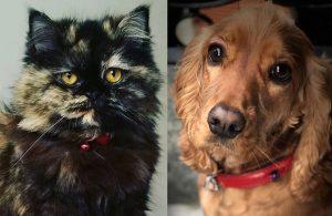 Güney Kore'de kediler ve köpekler karantinaya alınacak