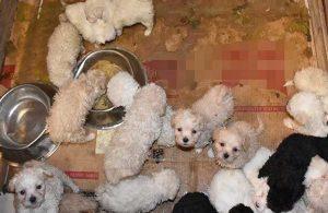 Otobüsün bagajında 23 yavru köpek ele geçirildi