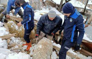 Göçük altında kalan koyunlar kurtarıldı
