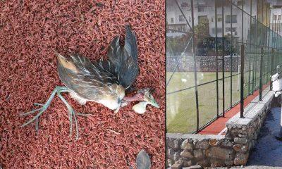 İlk kez Türkiye'de görülen bir kuş türü ölü bulundu