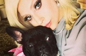 Lady Gaga'nın köpekleri silahlı saldırıyla kaçırıldı