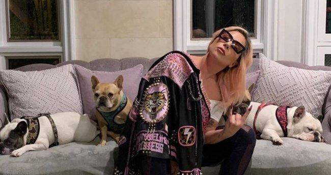 Köpekleri çalınan Lady Gaga'dan, getirene 500 bin dolar ödül