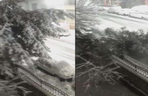Sultangazi'de ağaç otomobilin üstüne böyle devrildi
