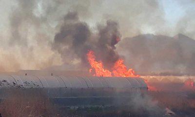Antalya'da rüzgar: Sazlık alanda başlayan yangın büyüdü