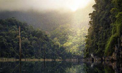 'Amazon ormanları Facebook'ta satılıyor' haberinin ardından soruşturma başlatıldı