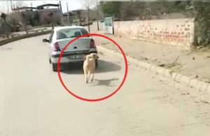 Nerede bu yasa? Bir köpeği otomobilin arkasına bağlayarak çektiler
