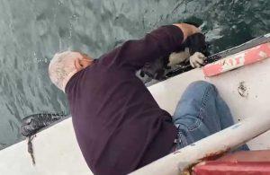 Haliç'in kahramanı şimdi de denize düşen köpeği kurtardı