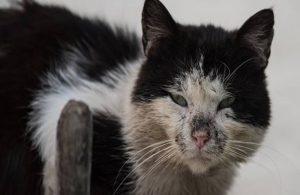 Kediye işkence eden kişi gözaltına alındı