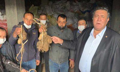 CHP'li Gürer: Patates üreticisi 'Yandım' diye feryat ediyor