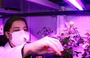 Konteynerde dikey tarım: 20 farklı türde bitki yetiştirildi