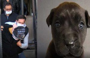 Yavru köpek Dora'yı öldürmüştü! Tutuklanma talebi reddedildi