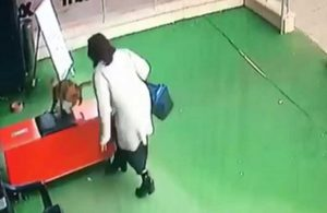 Nerede bu yasa? Hamile kediye saldıran kadın yoluna devam etti