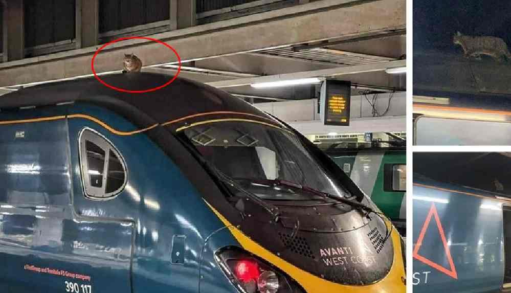 Tren istasyonunda 'kedi' seferberliği: 2,5 saatte indirildi