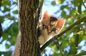 ABD'nin casus kedi projesi yıllar sonra ortaya çıktı!