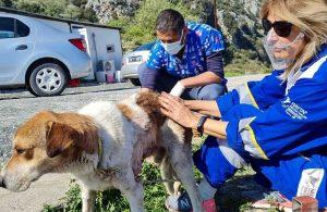 Köpeğin vücudundan çıkarılan tümör görenleri şaşırttı