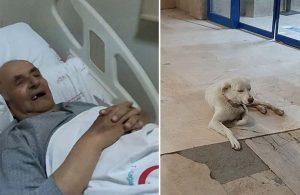 'Pamuk' köpek, sahibini taburcu olana kadar hastane önünde bekledi