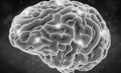 Şahin Ciner | Beyinlerin göçü gerçekleşmeden, beyin göçü bitmez!