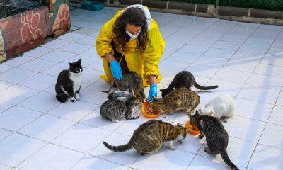 Buca'da engelli kedilere 5 yıldızlı hizmet