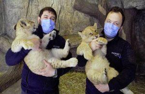 Yılın ilk yavru aslanlarına ilginç isim önerileri