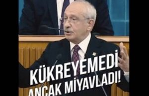 Kılıçdaroğlu video paylaştı: Bırakın aslanı kedi gibi bir miyavlama sesi geldi