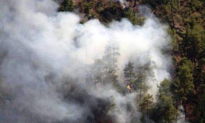 Muğla'nın iki ilçesinde orman yangını