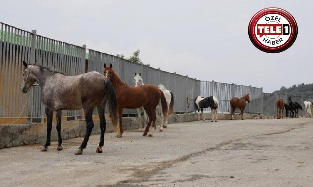 İddia: Hatay'a gönderilen 11 at öldü, diğerleri de satıldı