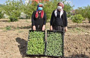 Tarsus Belediye Başkanı Bozdoğan, yerli tohumları toprakla buluşturdu