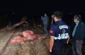Adana'da tarlada kesilmiş 3 at bulundu