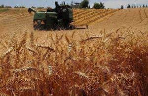 Rusya buğday ihracatını durduruyor: Kendi çiftçimizi desteklemek zorundayız