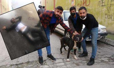 Kadına tecavüz etmeye çalışan şahıslar esnaf ve köpek 'Karlos' tarafından yakalandı