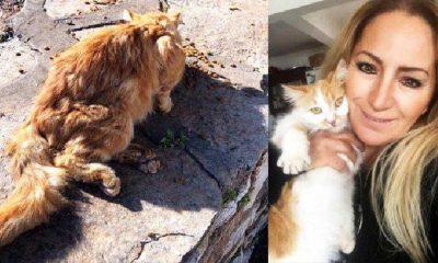Nerede kaldı bu yasa? Bir sokak kedisini kurşunla yaraladılar