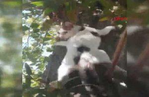 Ağaca çıkmış yavru kedinin kurtarılma anları gülümsetti