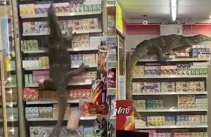 Markette komodo ejderi paniği