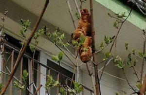 Ağaçtaki dev kruvasan itfaiyeyi harekete geçirdi