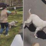Pitbull dehşeti: Fayton atına saldırınca olanlar oldu