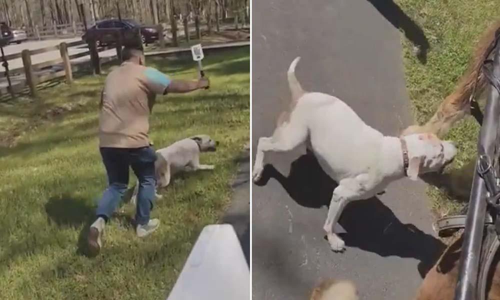 Atın Pitbull saldırısına karşılığı hayrete düşürdü