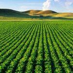 16 milyon metrekare tarım arazisi yabancılara satıldı