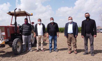 Tarsus Belediyesi'nin yerli tohum atağı Tarsus topraklarında hızla yayılıyor
