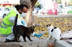 Bayraklı Belediyesi veterinerleri her gün can dostları besliyor