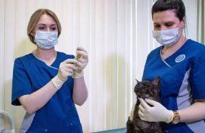 Hayvanlara da koronavirüs aşısı yapılıyor