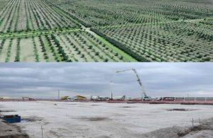 AKP'li belediye 85 bin ağaç kesti