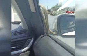Otomobilin camından yılan çıktı